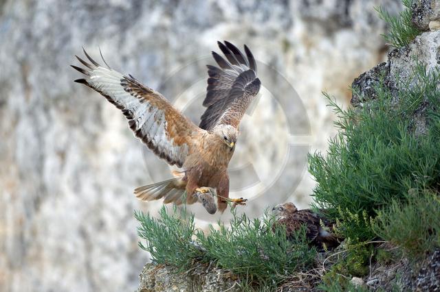Tiere-Vögel-39.jpg