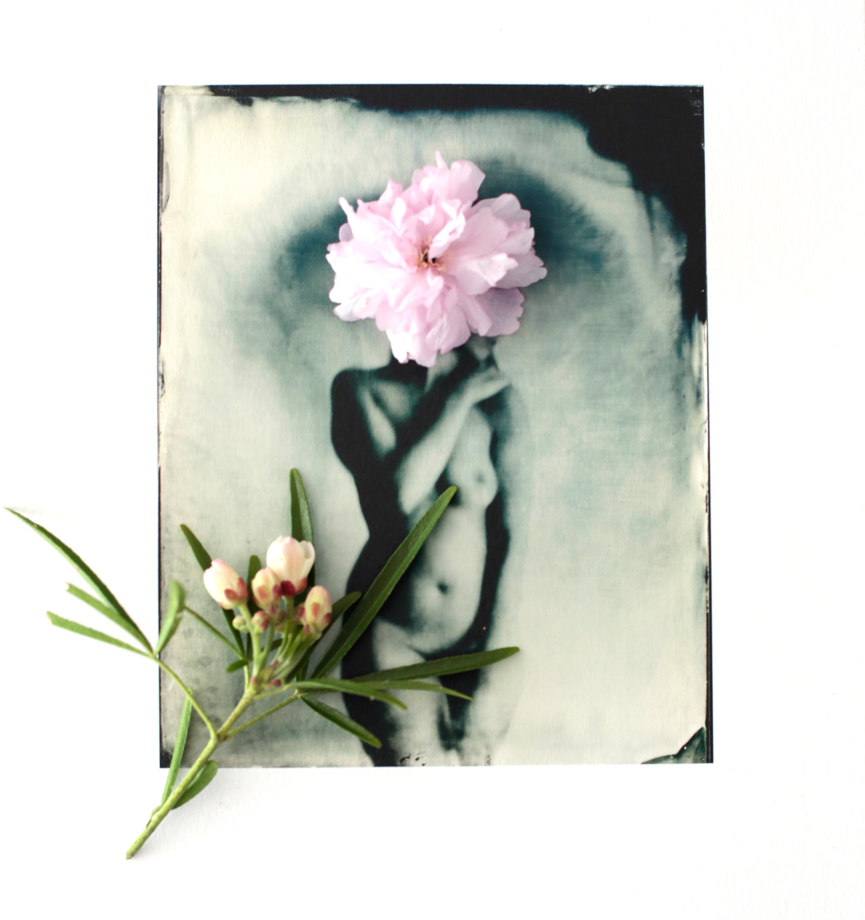 FLOWERS_1_021.JPG
