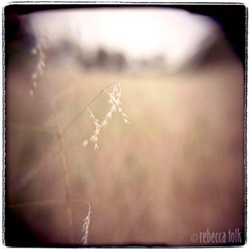 01-04-03-10 Oatgrass .jpg