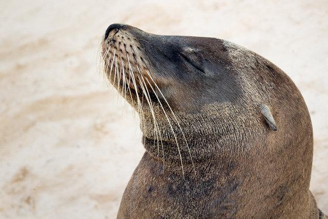 150419_Galapagos-1278.jpg