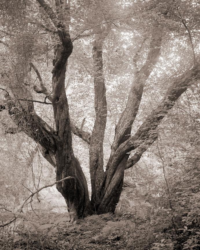 Hidden_Forest.jpg