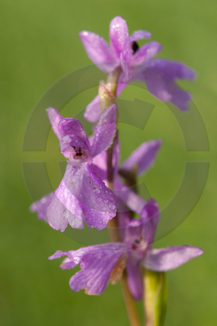 Pflanzen_Copyright_366.jpg