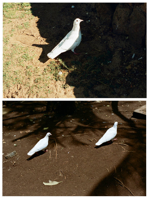 doves_1.jpg