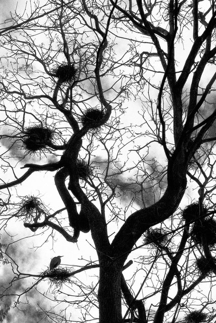 Tree-20bw.jpg