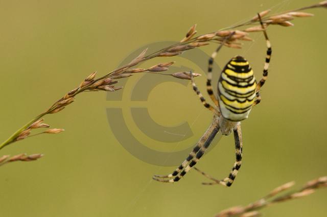 Tiere-Insekten-11.jpg