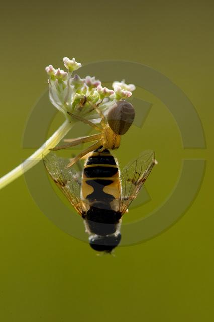 Insekten_Copyright_406.jpg