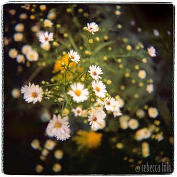 07-10-02-09 Starburst.jpg