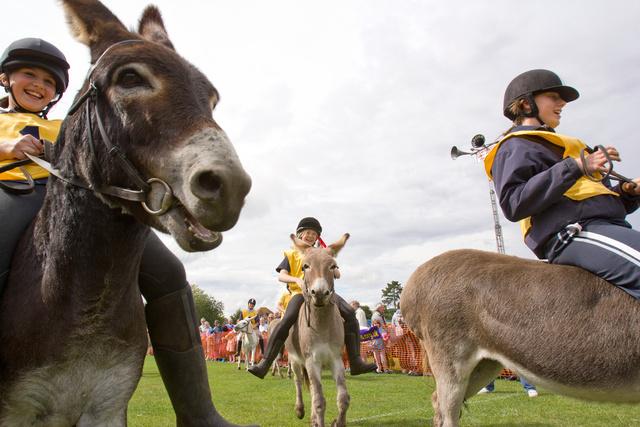 Donkey Derby.jpg