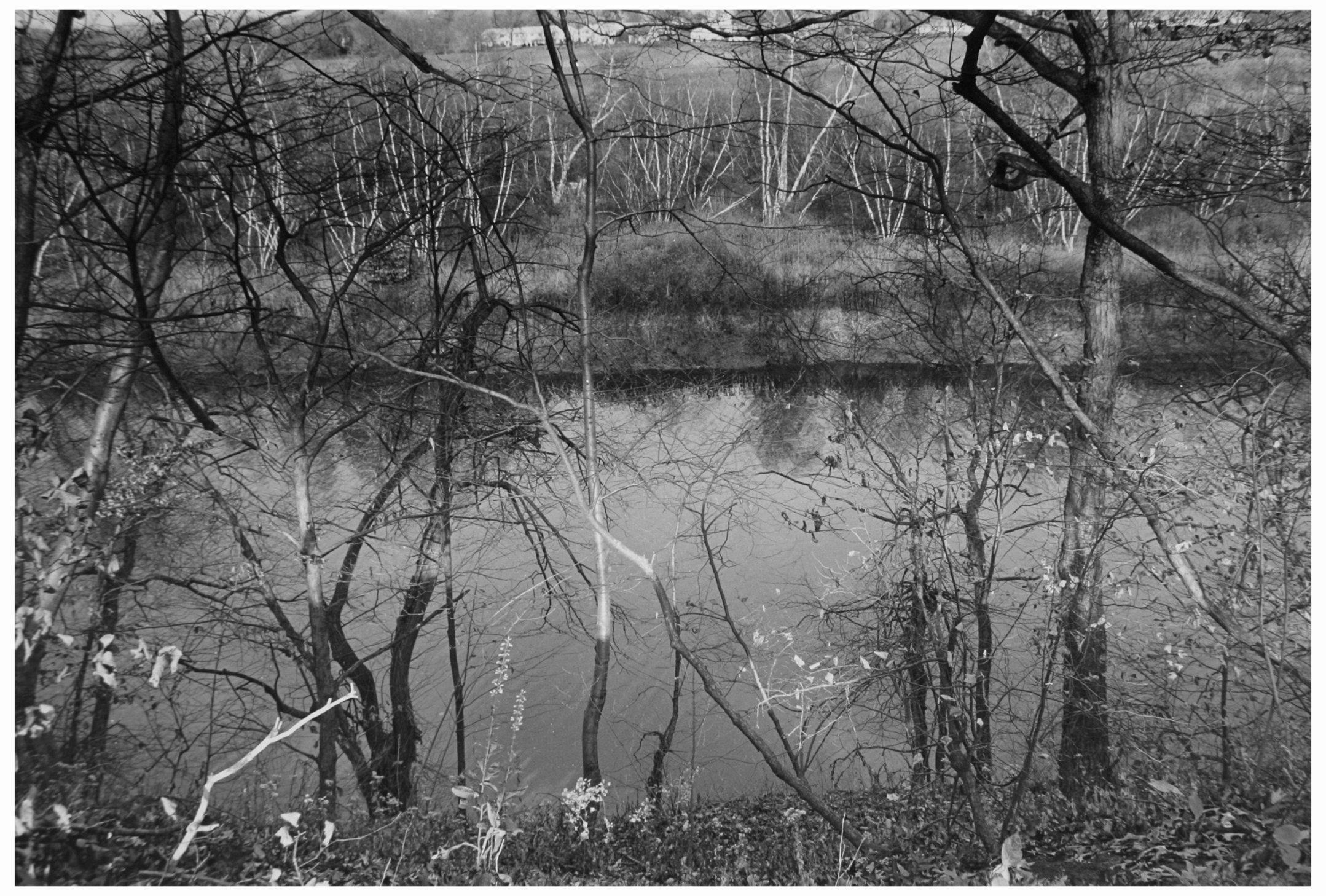 Trees  13.jpg