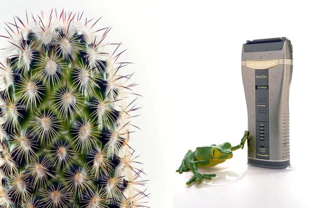 051cactus-razor.jpg