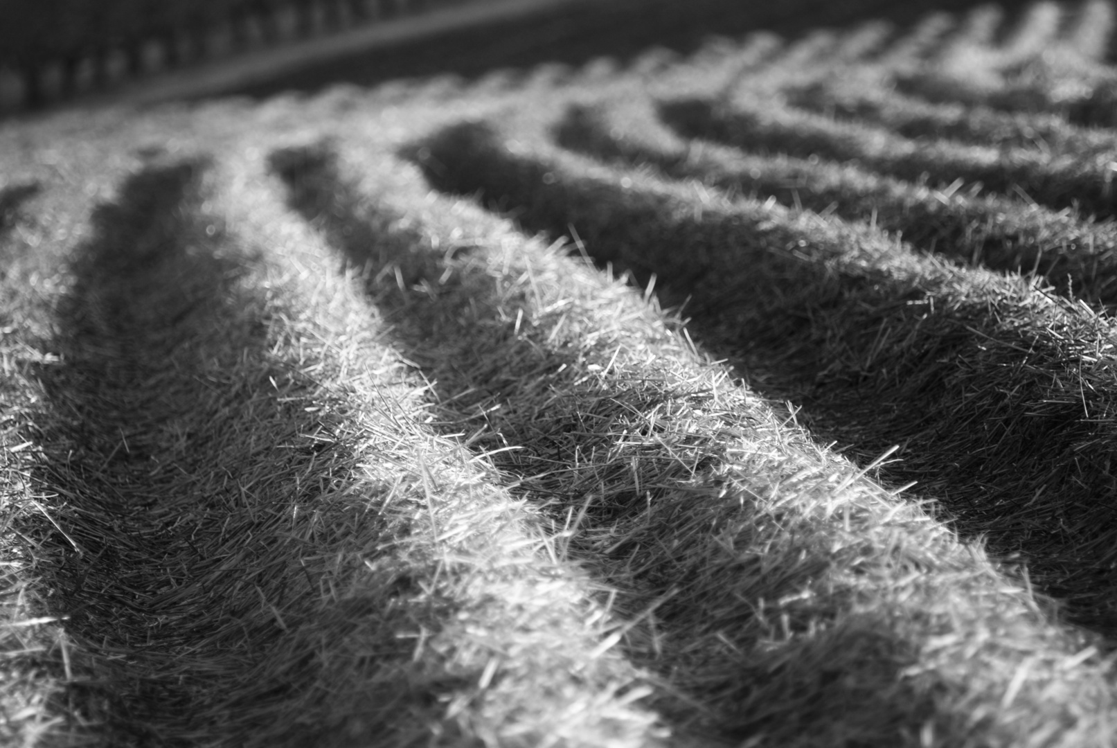 Erdbeerfeld im Winter