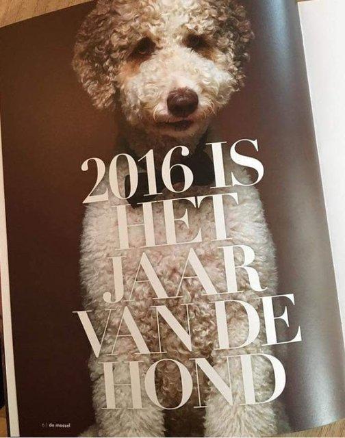 Flex Mosselmagazine 2016.JPG