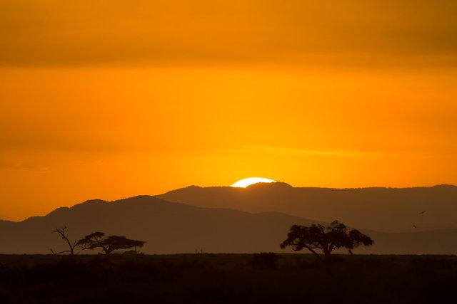 Kenia Lions51.jpg