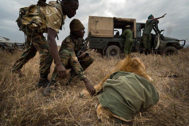 Kenia Lions29.jpg