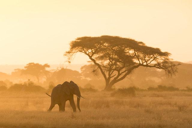 Kenia Lions44.jpg