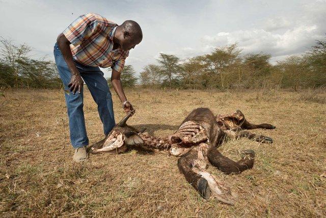 Kenia Lions39.jpg