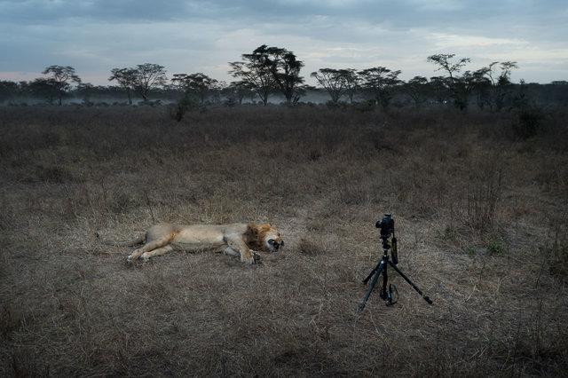 Kenia Lions33.jpg