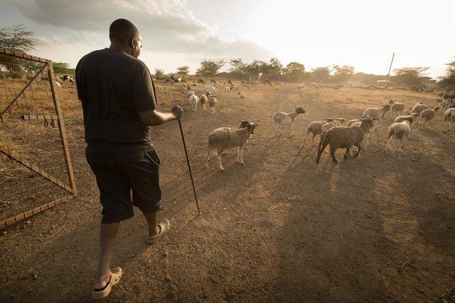 Kenia Lions02.jpg