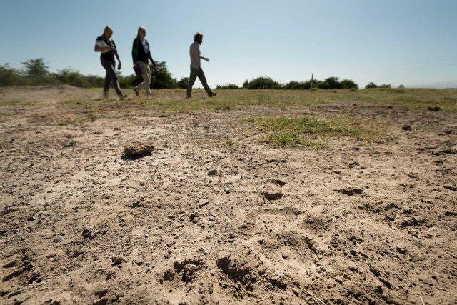 Kenia Lions56.jpg