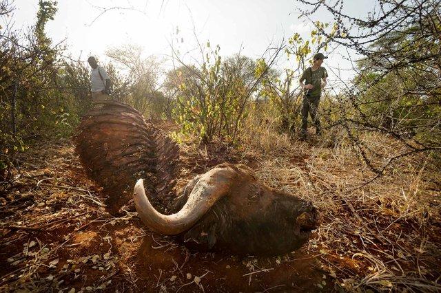 Kenia Lions22.jpg