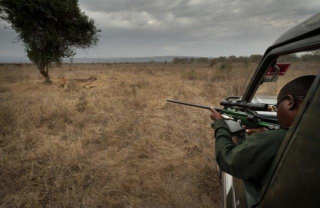 Kenia Lions26.jpg