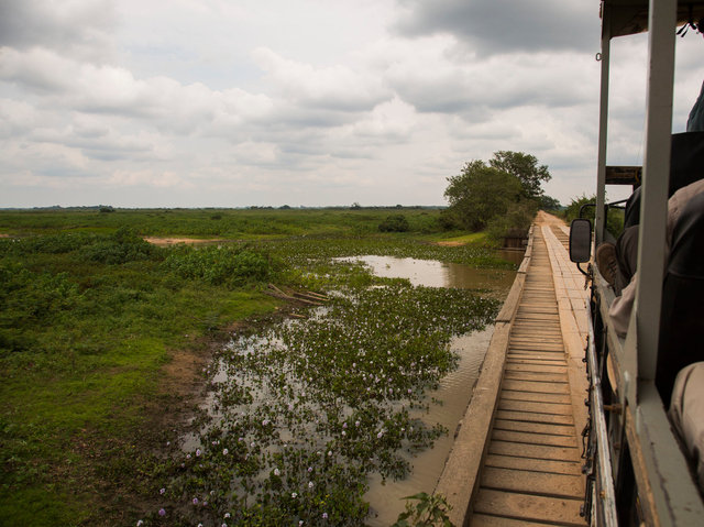 View from wooden bridge on Transpantaneira Road