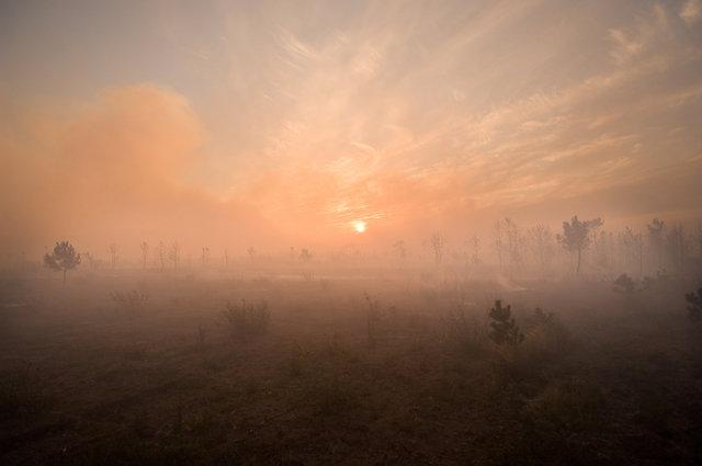 Forestfire-33.jpg
