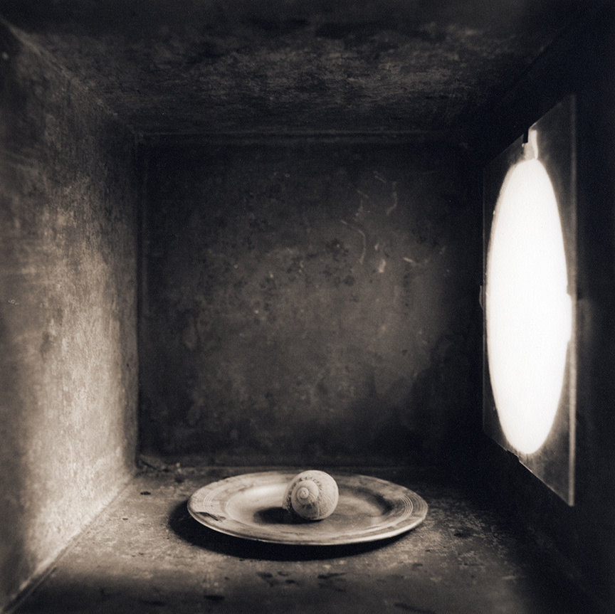 Snail, c 2000