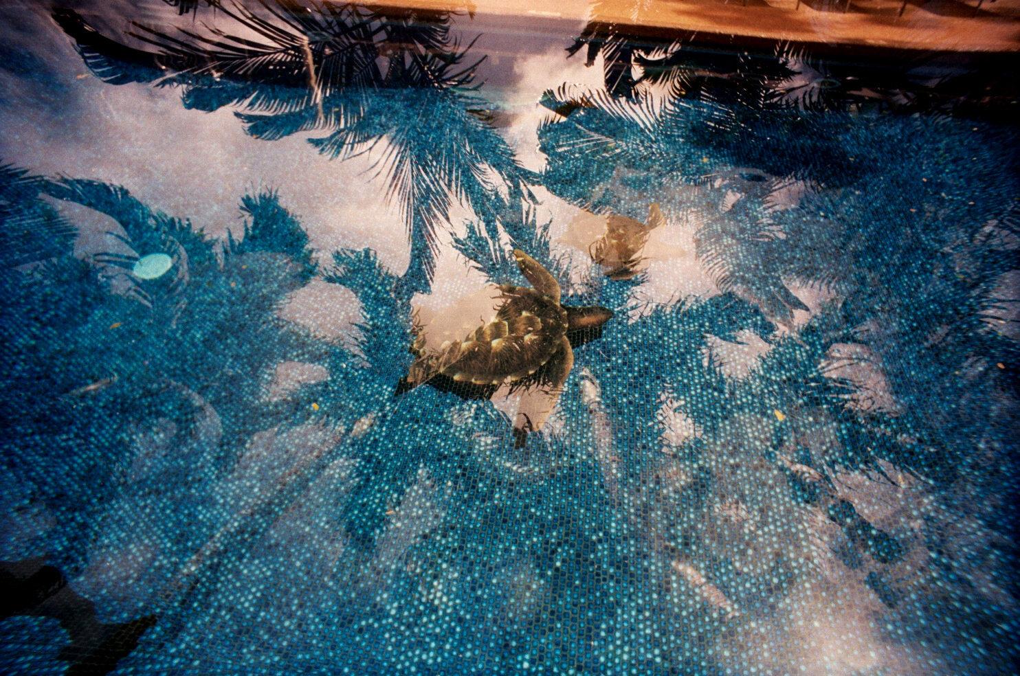 turtlepool.jpg