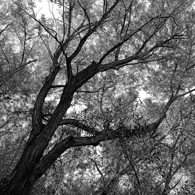 Tree_Lower_right_6x6.jpg