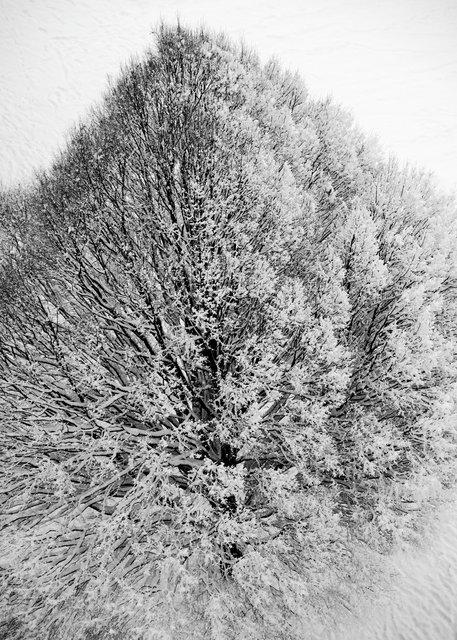Tree-40bw.jpg