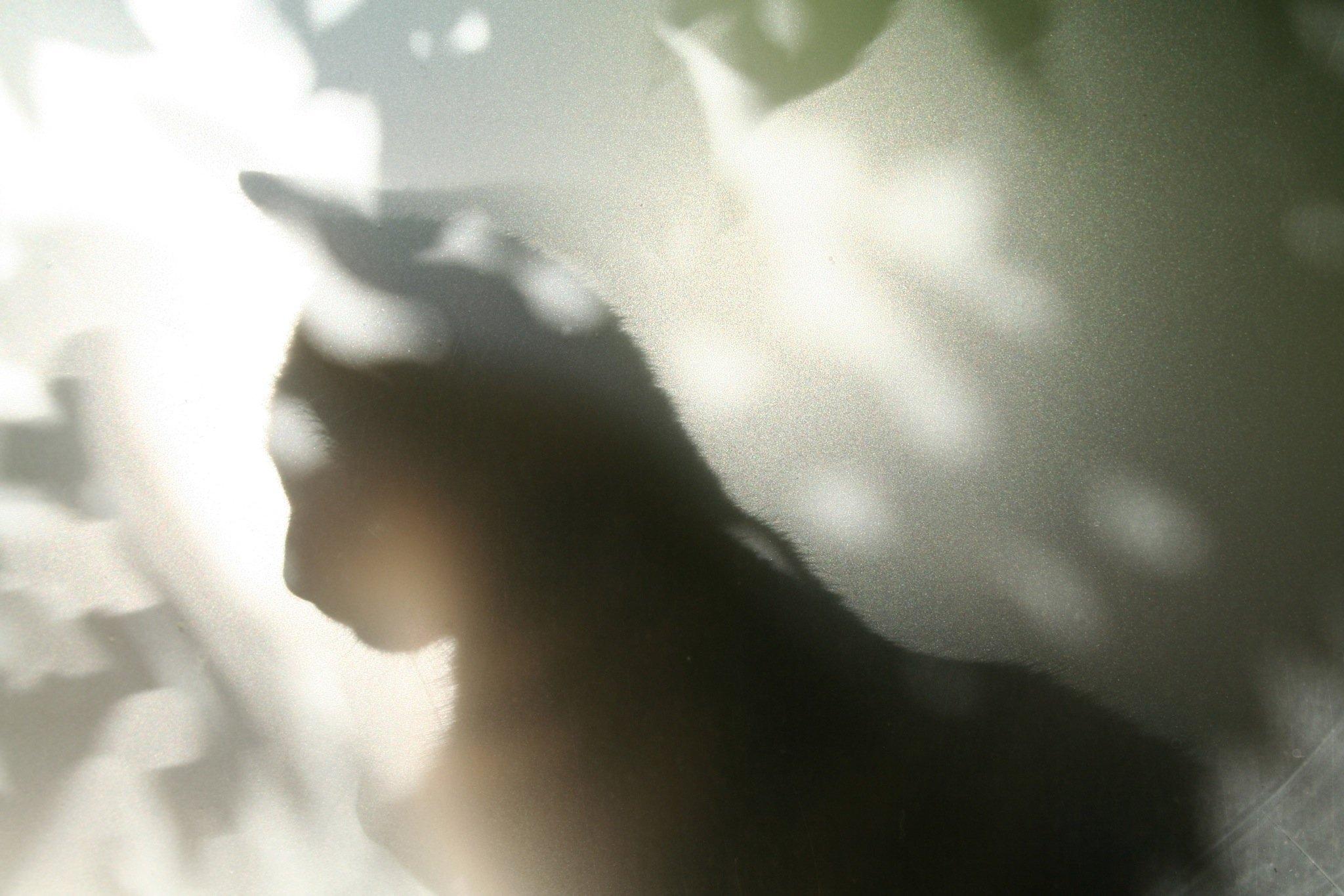 Spanky sillhouette_1396201238_o.jpg