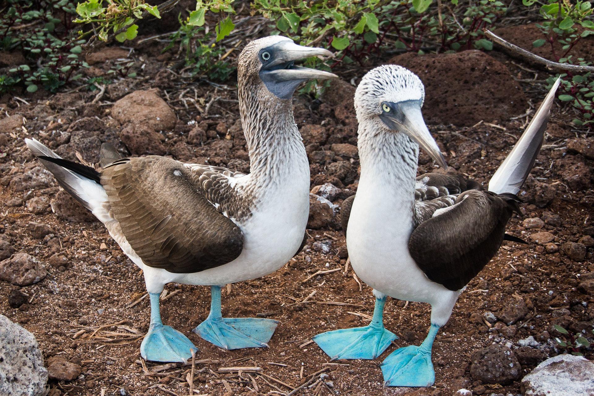 150418_Galapagos-1095.jpg
