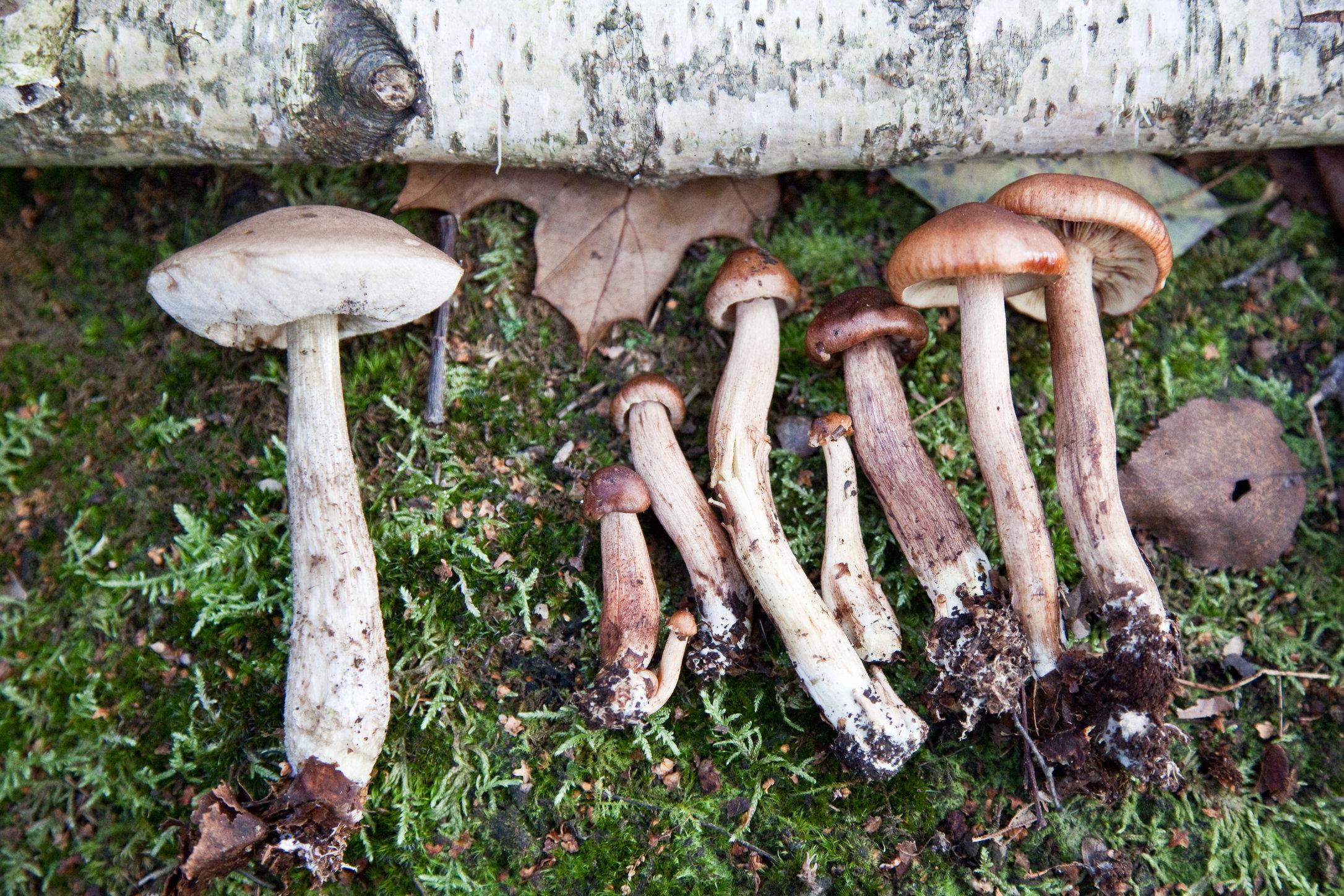 Mushroom_MG_0478.jpg