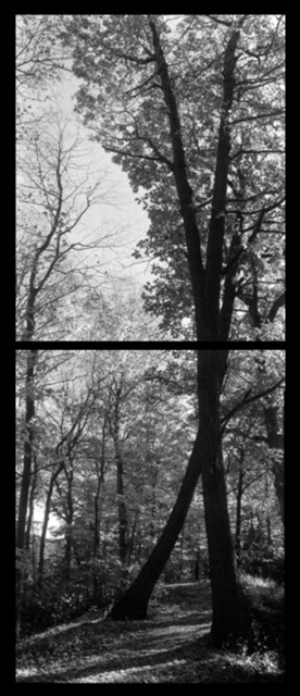 Arbor9-96 copy.jpg