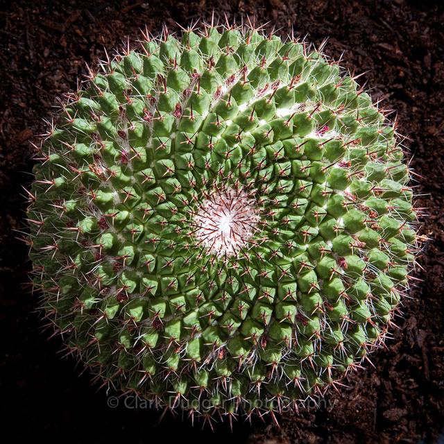 Cactus_5_12x12.jpg