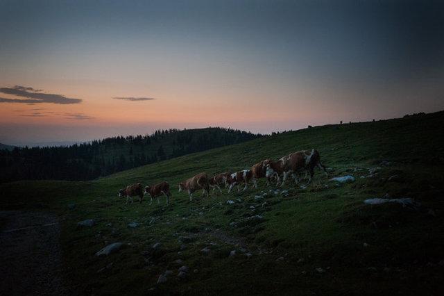shepherds_017.jpg
