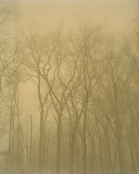 In the Snow Storm, New Jersey, 2010