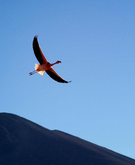 flamingo2.jpg