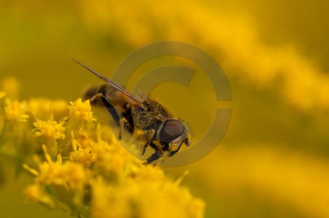 Insekten_Copyright_290.jpg