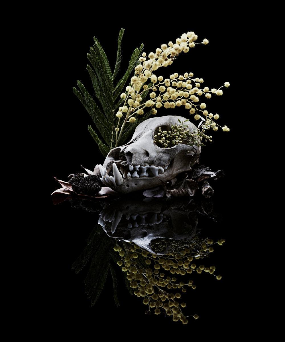 Skull_Dog.jpg