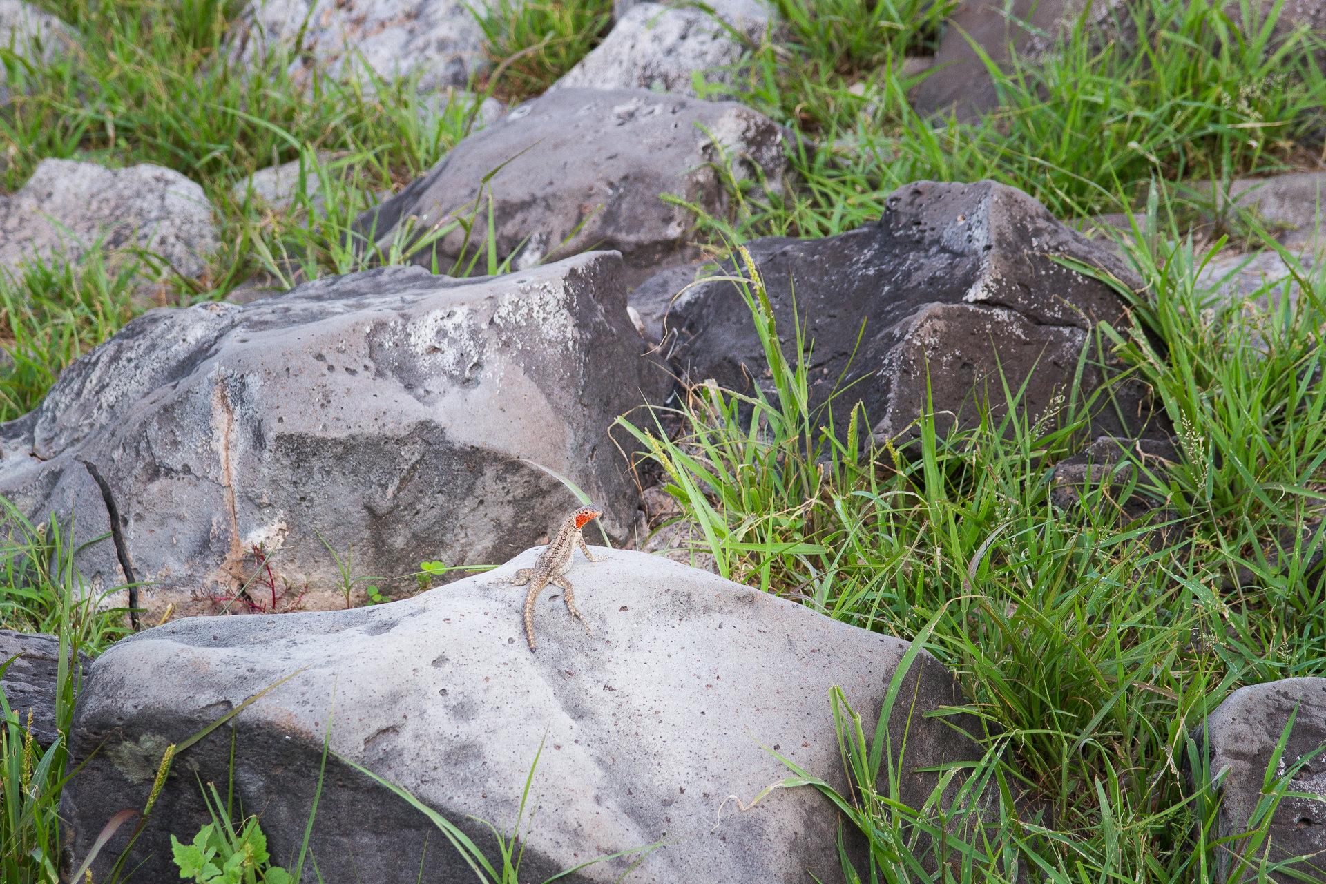 150419_Galapagos-1298.jpg