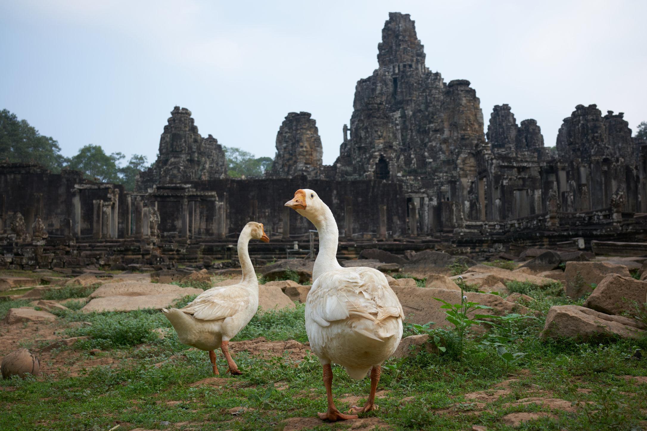 cambodia 9.jpg