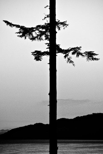 Tree-29bw.jpg