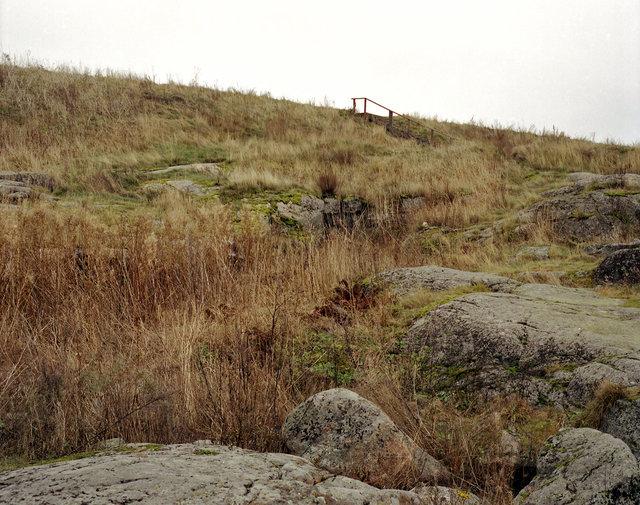 grass&roc.jpg