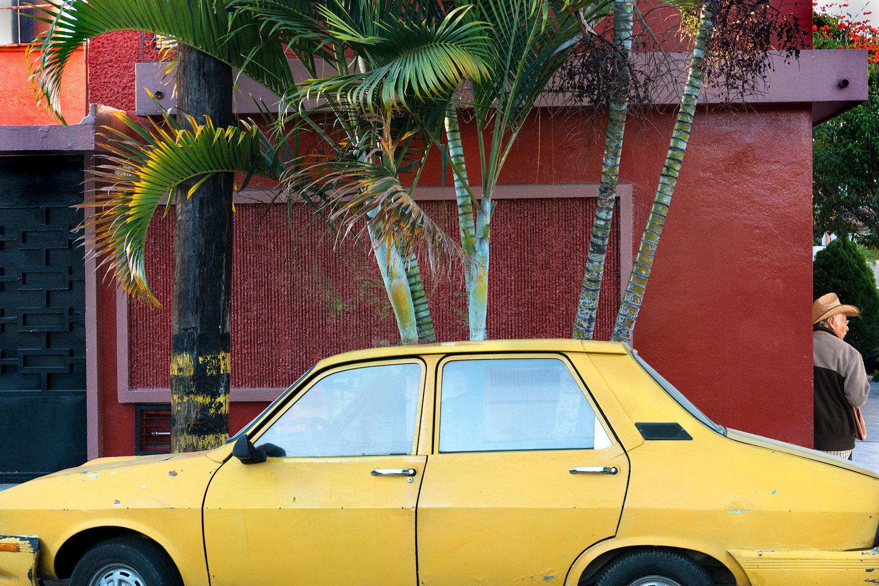 Árboles de Oaxaca con Renault 12