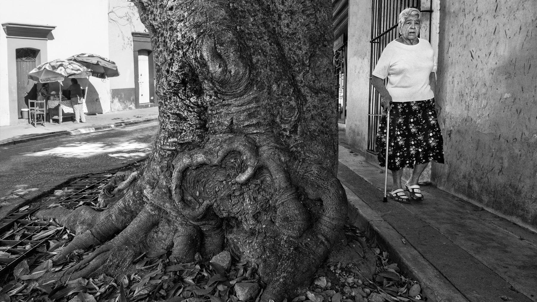Árboles de Oaxaca  SOLD