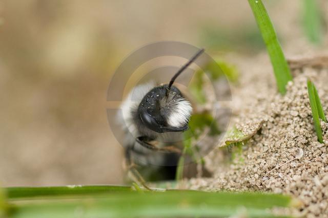 Tiere-Insekten-6.jpg