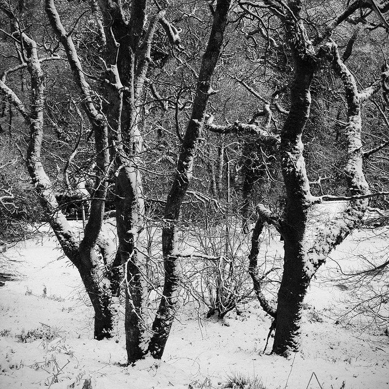 Burrator_Trees_RDDI180113A.jpg