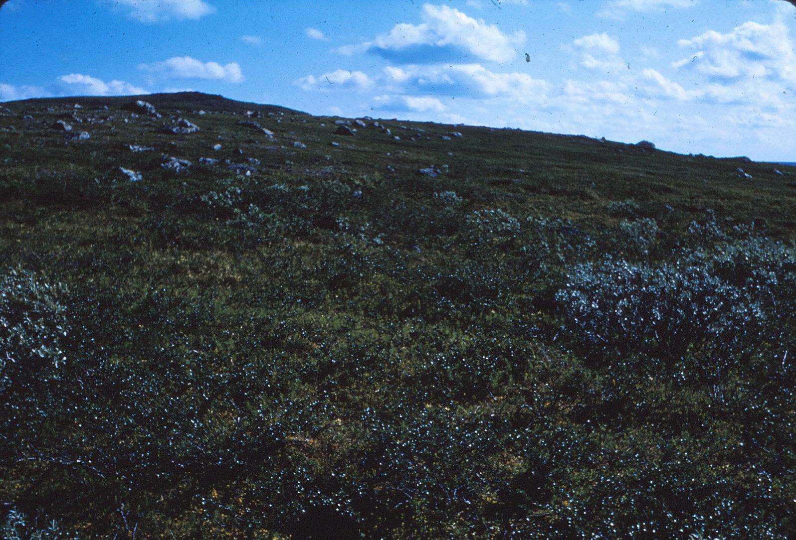 940 (14) Vegetatie
